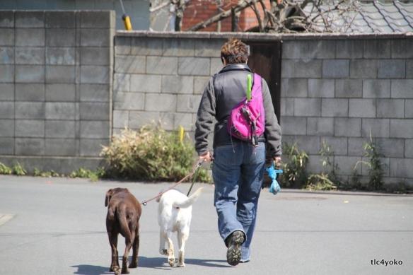 2012年春の訪れ 盲導犬アトム 虐待の赤裸々な真実取材 T L C